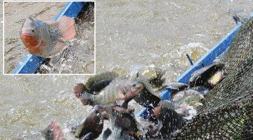 pescaesportivacountryclubvalinhos