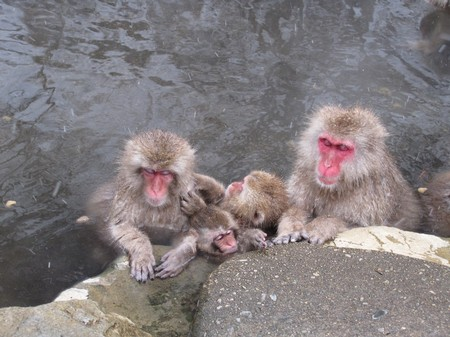 img_3109_nagano_spa-montain-monkey