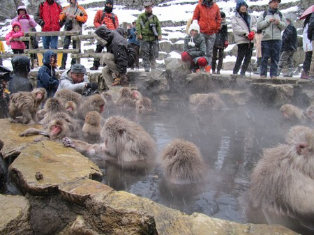 img_3130_nagano_spa-montain-monkey